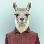 wonderllama Avatar